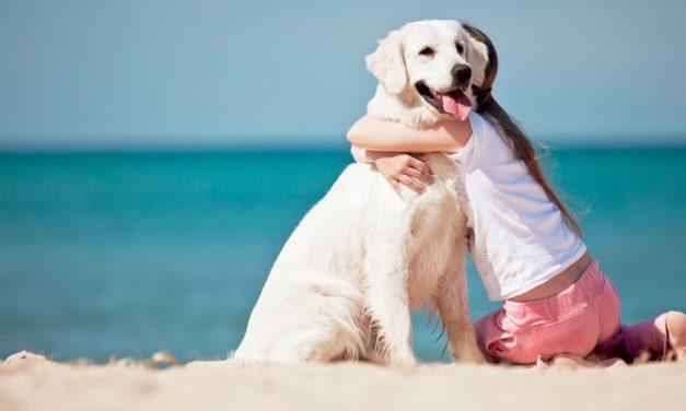 Rettifica su un articolo pubblicato il 7 maggio 2014 che riguardava una manifestazione di cani a Tortona