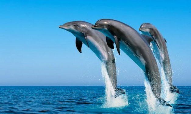 """Nuovo appuntamento con il nostro mare organizzato dal Lions Club: """"L'importanza del Ponente ligure per i cetacei"""""""
