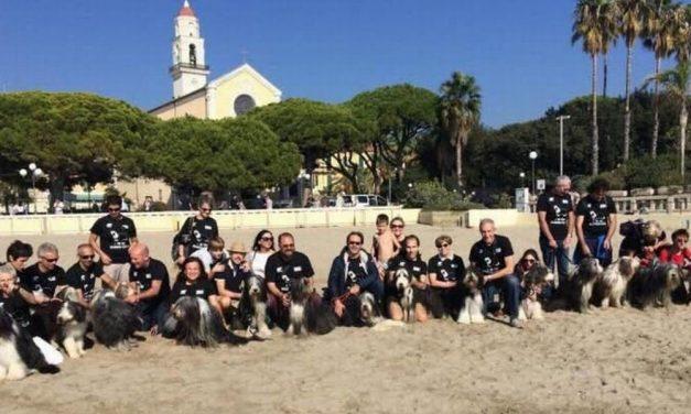 Tanta gente a Diano Marina per l'unico raduno in Italia dei cani della razza Bearded collie. Le immagini