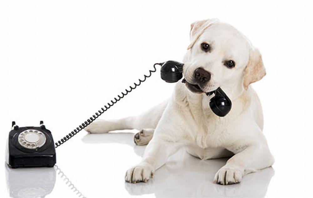 Una dianese cerca qualcuno che possa tenerle il cane dal pomeriggio di Capodanno fino al giorno dopo