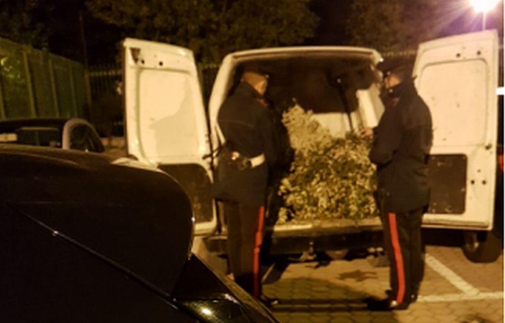 Rubano 200 kg di piante ornamentali a Taggia, arrestati dai Carabinieri  due fratelli moldavi