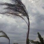 Il vento flagella Sanremo, diversi interventi dei Vigili del fuoco per tegole a alberi pericolanti