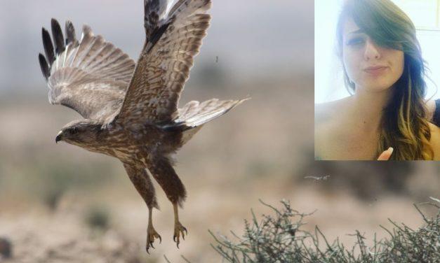 """Tre giovani dianesi salvano una poiana: """"E' un animale protetto e chi ha sparato dovrà risponderne"""" /La storia"""