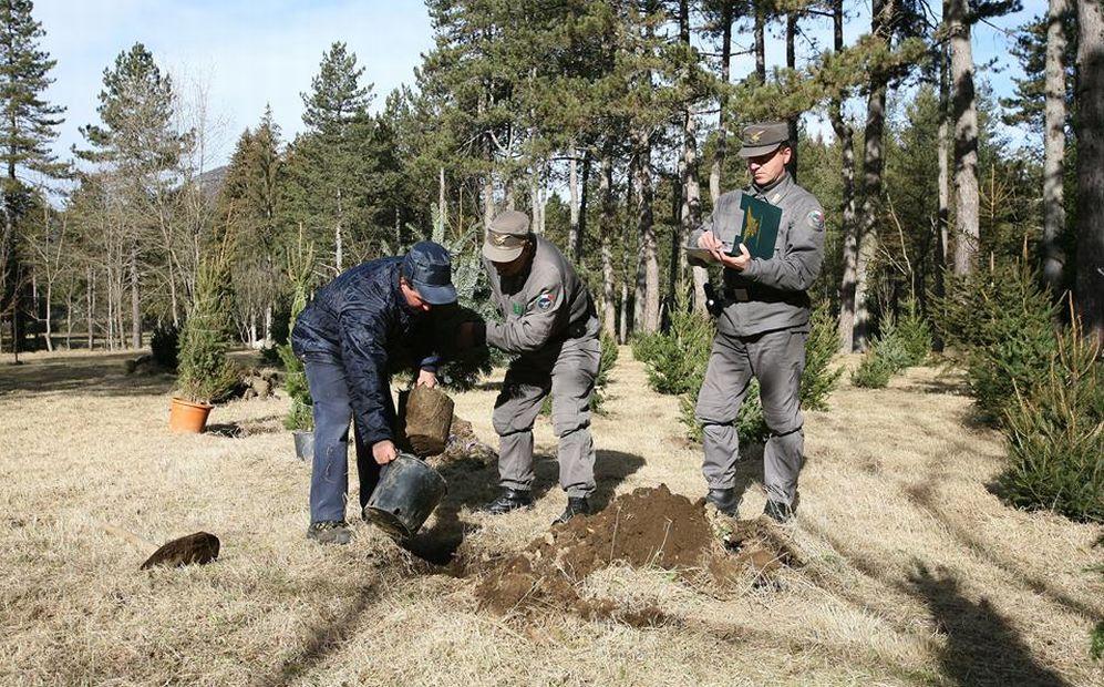 Trasformano un bosco n un pioppeto nel casalese individuati dai forestali