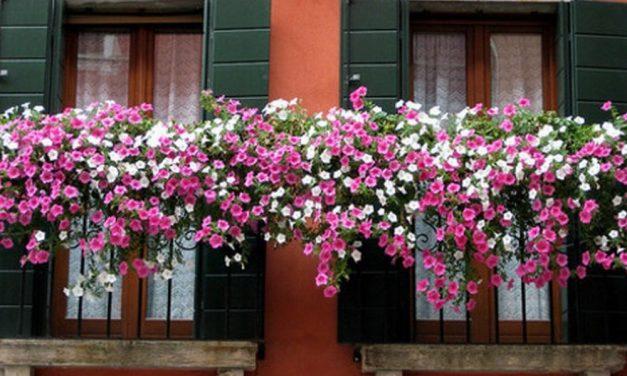 """Ad Alessandria al via la rassegna """"Balconi fioriti"""""""
