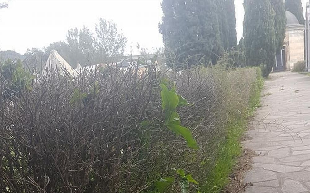 Il cimitero di San Bartolomeo sembra una giungla: erba alta, tombe nascoste dalla vegetazione e manutenzione inesistente