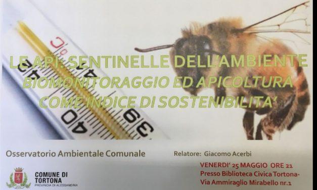 Venerdì a Tortona un dibattito sull'Ambiente e le api
