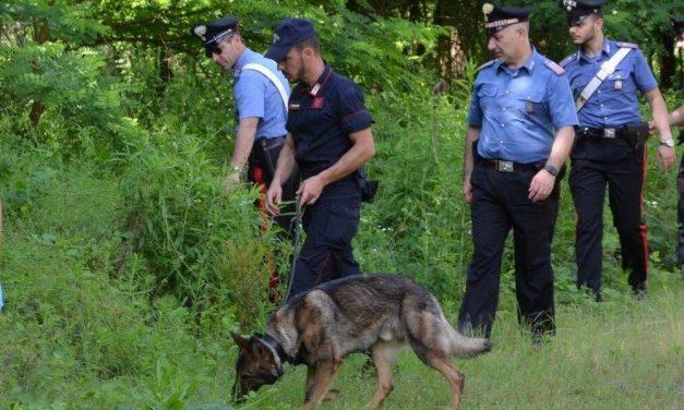 Ecco cosa succedeva a Castelnuovo Scrivia nel parco trasformato in una centrale di droga