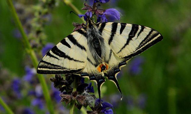 """Finalmente nasce un percorso per visitare l'Oasi Naturalistica di Isola Sant'Antonio con la """"Via delle Farfalle"""""""