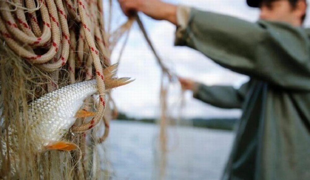 Coldiretti Liguria: salpano le lampare per la pesca all'acciuga ligure