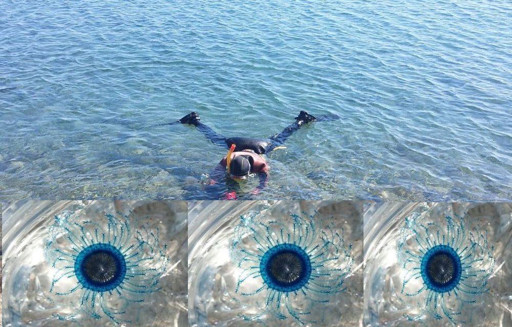 """Nel mare di Diano Marina i sub di """"Informare"""" hanno avvistato il """"bottone blu"""" del mare"""