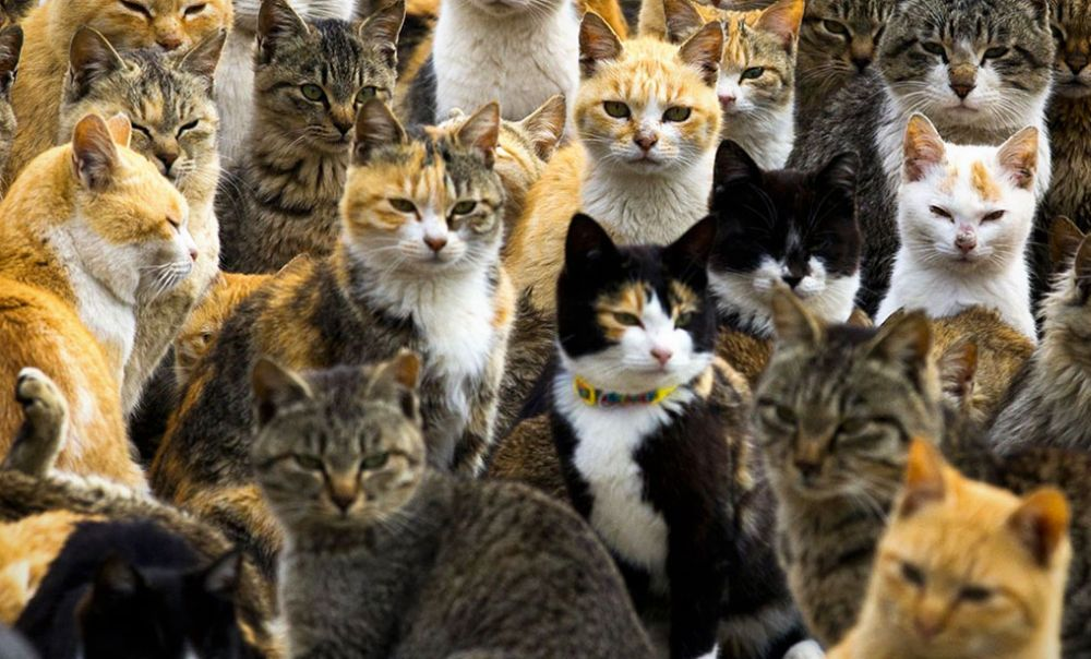 Alessandria invasa dai gatti con 215 colonie feline e ben 2.023 mici randagi