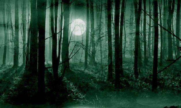 Ritrovato da un uomo il bimbo di 6 anni perso nel bosco a Predosa, spaventato ma sta bene
