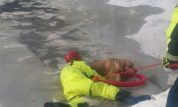 Un cane rischia di morire in un laghetto ghiacciato a Volpedo, salvato dai pompieri