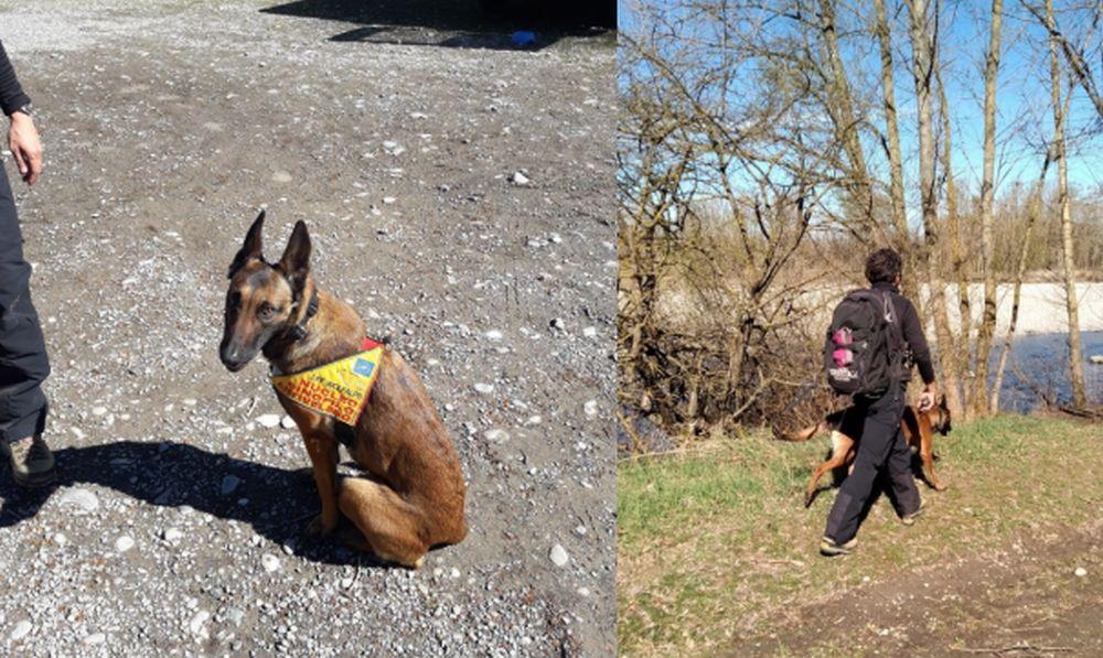 Tanti bocconi avvelenati nel Tortonese e Gaviese, scattano i controlli dei Forestali col cane
