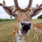 Cia e Confagricoltura di Alessandria incontrano il Prefetto per la fauna selvatica, ma non solo