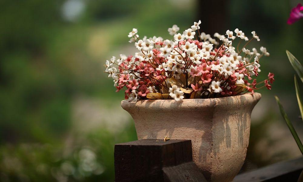La pazza primavera colpisce il mercato delle piante in vaso a Imperia