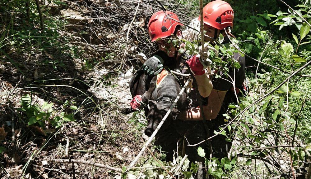 I Vigili del Fuoco di Novi Ligure salvano due cani a Sardigliano caduti in un dirupo