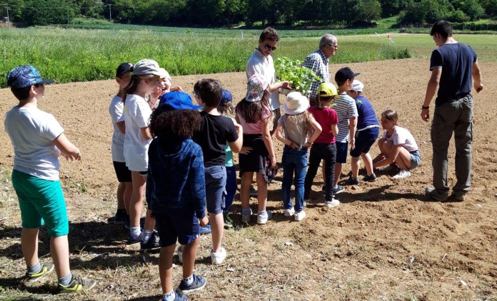 """I ragazzi dell'Istituto """"Ciampini"""" di Novi si sono cimentati in un'attività di peer education con la scuola elementare di Fresonara"""