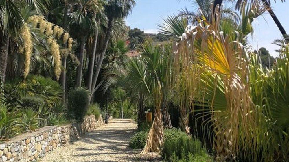 Il Comune di Bordighera dà il via al censimento informatizzato di 655 esemplari su tutto il territorio