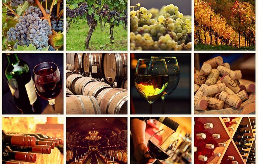 A Casale Monferrato ha preso il via  un progetto per la valorizzazione del vino, ma a Tortona cosa fanno i vignaioli?