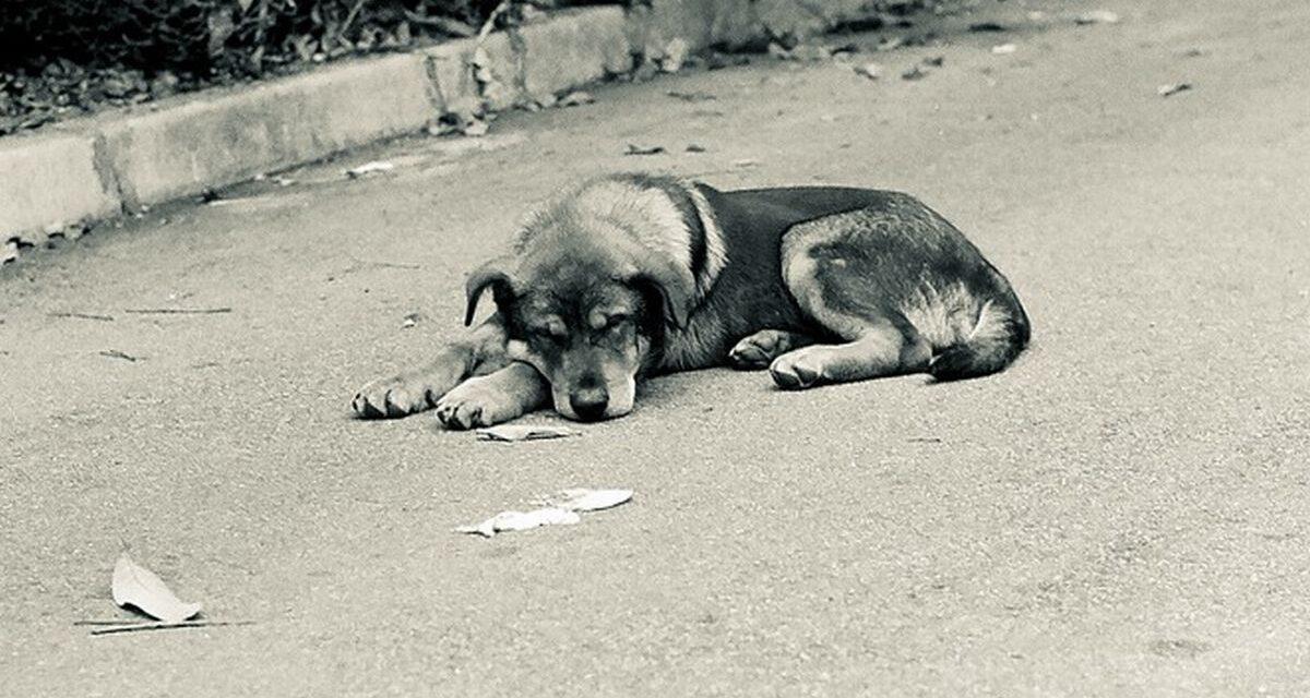 Da Bergamo fino a Casale Monferrato per abbandonare un cane