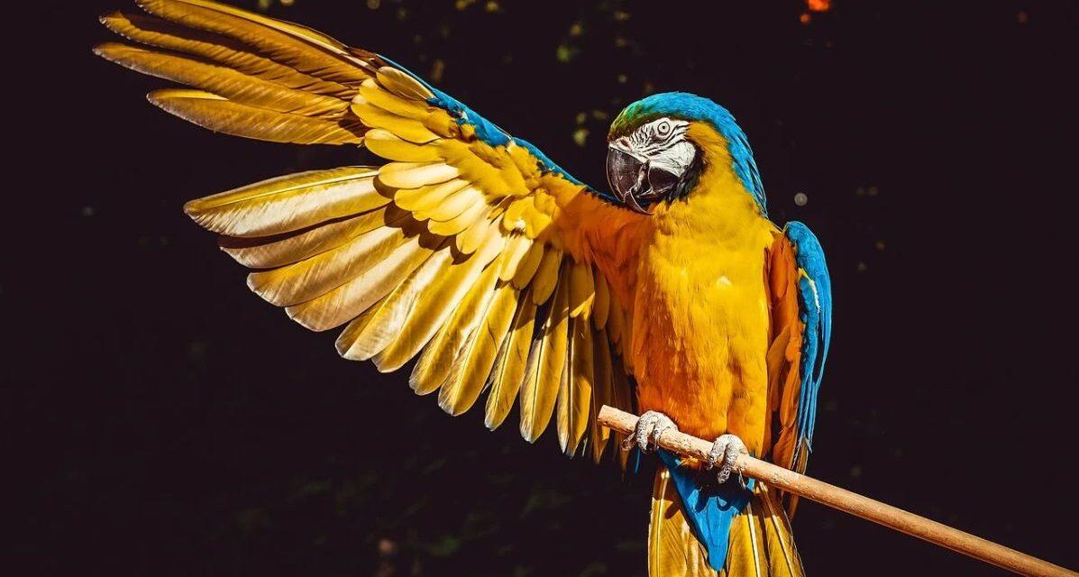 Donna di Alessandria multata di 3 mila euro per un pappagallo esotico che aveva in casa