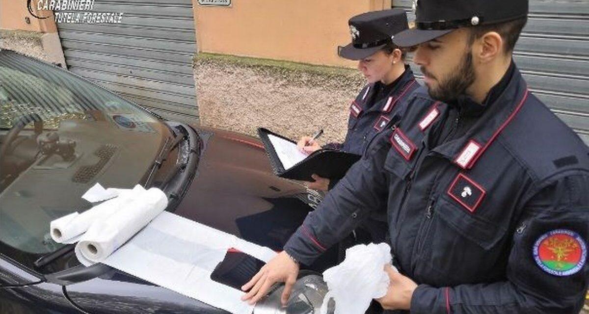 Controlli a tappeto dei Carabinieri Forestali sulle borse usate in negozi e supermermercati