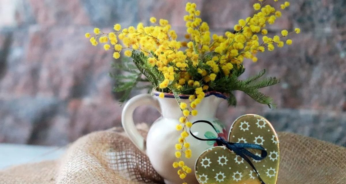 Festa della donna: la mimosa made in Liguria grande protagonista dell'8 marzo
