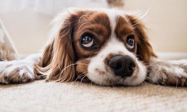 5 consigli pratici prima di adottare un animale domestico