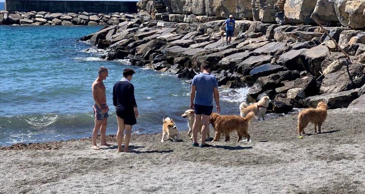 Riaperta la spiaggia per i cani a San Bartolomeo al Mare