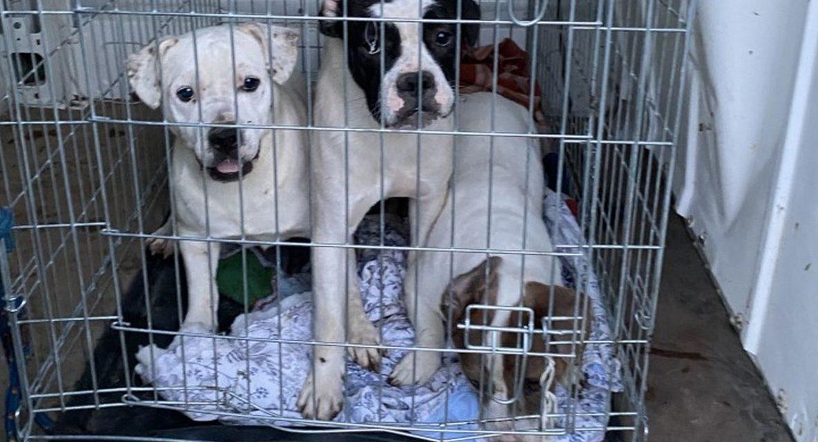 47 cani e 18 cuccioli sequestrati a Bassignana e inviati a due canili
