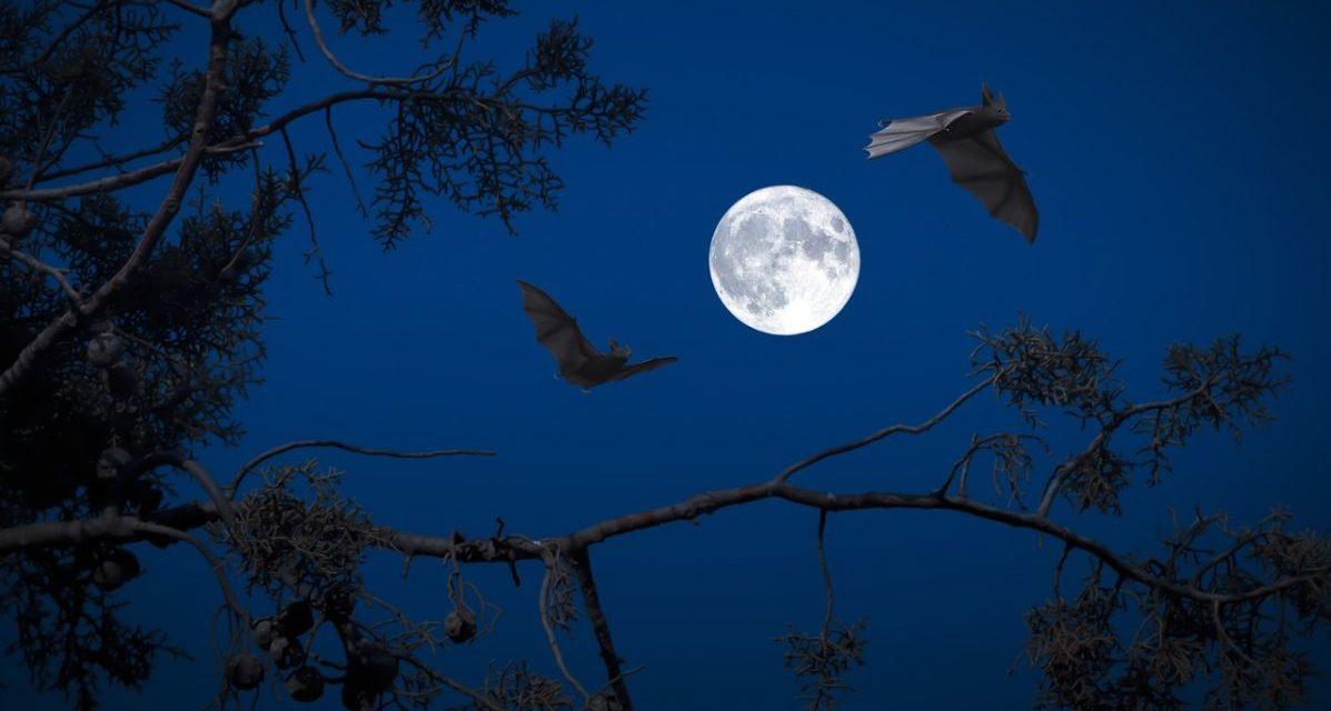 Ad Isola Sant'Antonio l'escursione notturna alla scoperta dei pipistrelli