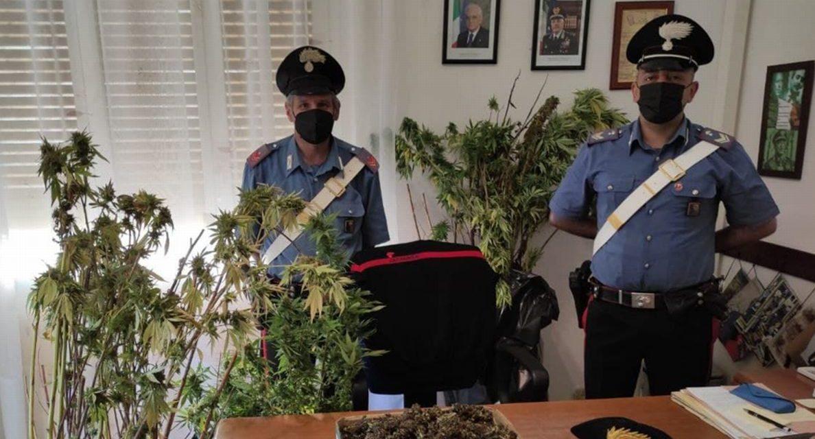 Ceriana: i Carabinieri arrestano un uomo che coltivava marijuana nella propria abitazione